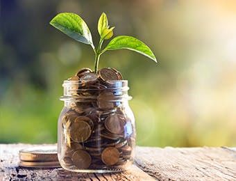 money in a jar with growing plant